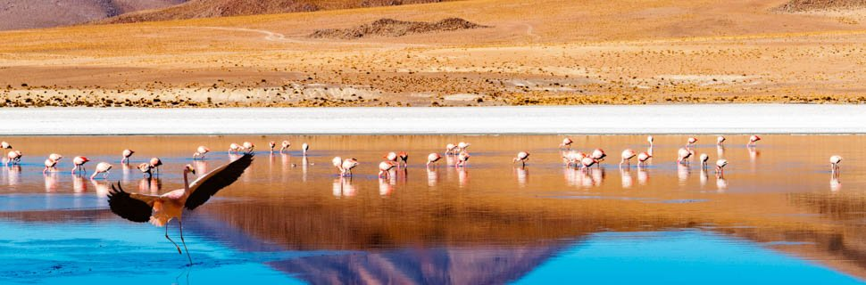 Flamingos in einer Lagune in Chile